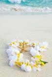 Leu e stelle marine sulla spiaggia Immagine Stock