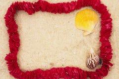 Leu sur la plage images libres de droits