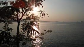 Leucaena Leucocephala Tree Silhouette in front of Sunset on Koh Samui Island in Thailand. Royalty Free Stock Photo