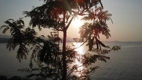 Leucaena Leucocephala Tree Silhouette in front of Sunset on Koh Samui Island in Thailand. Stock Photos