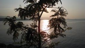 Leucaena Leucocephala Tree Silhouette in front of Sunset on Koh Samui Island in Thailand. Royalty Free Stock Image