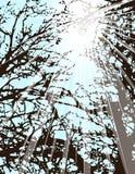 Leuchte durch Bäume lizenzfreie abbildung