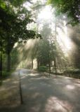 Leuchte durch Bäume im Park Lizenzfreies Stockbild