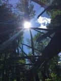 Leuchte durch die Bäume Stockfotografie