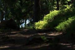 Leuchte im Wald Stockfotografie