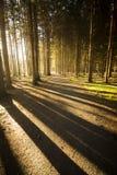 Leuchte im Wald Stockbild