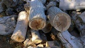 Leuchte meldet ein woodpile Grau an Stockfoto