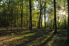 Leuchte und Holz Lizenzfreies Stockfoto