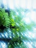 Leuchte und Schatten Lizenzfreie Stockfotografie