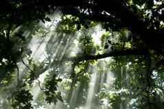 Leuchte unter den Bäumen Lizenzfreies Stockbild