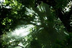 Leuchte unter den Bäumen Stockfotografie