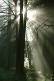 Leuchte von der Sonne Lizenzfreie Stockfotos