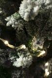 Leuchten auf Weihnachtsbaum Stockbilder