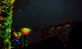 Leuchten Sie der Nacht mit Bäumen lizenzfreies stockbild
