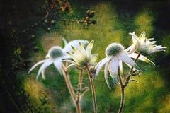 Leuchtende antike Art Flanell-Blumen Stockbild