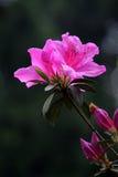 Leuchtende Finger-Blüte Lizenzfreie Stockfotografie