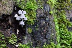 Leuchtende Pilze Lizenzfreie Stockbilder