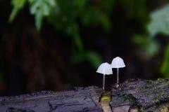 Leuchtende Pilze Stockbild