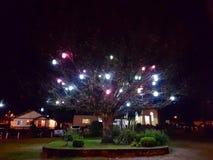 Leuchtender Baum Stockfotografie