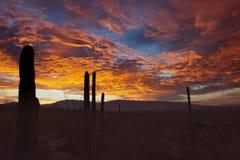 Leuchtender orange und roter Sonnenuntergang mit Saguaro-Kakteen im Vordergrund Stockbild