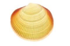 Leuchtendes Shell Lizenzfreie Stockfotografie