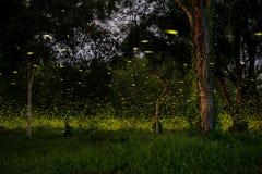 leuchtkäfer Lizenzfreies Stockfoto