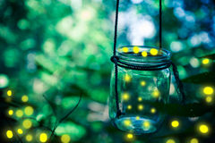 Leuchtkäfer in einem Glas lizenzfreie stockfotos
