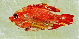 Leuchtorange-Rotbarsch stockfotos
