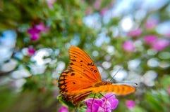 Leuchtorangeschmetterlingsfokus auf dem Insektenhintergrund verwischt Stockbilder