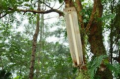 Leuchtstofflampe im Wald stockbilder