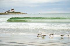 Leuchtturm mit kleiner Welle und Vögeln stockbild