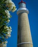 Leuchtturm und Blumen lizenzfreie stockfotografie