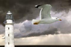 Leuchtturm und Seemöwe Stockbild