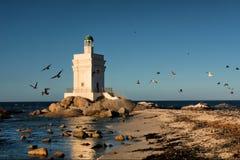 Leuchtturm und Vögel stockbilder