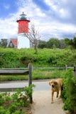 Leuchtturm-Weg und Hund Stockfotos