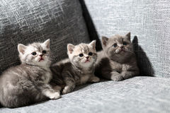 Leuk babykatje royalty-vrije stock fotografie