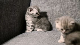 Leuk babykatje stock videobeelden