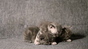 Leuk babykatje stock footage