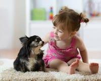 Leuk babymeisje die chihuahuahond bekijken Het portret van de close-up Royalty-vrije Stock Foto's
