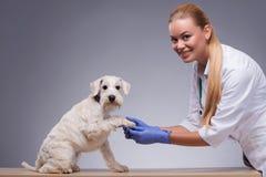 Leuk bezoekt weinig hond dierenarts stock fotografie