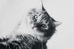 Leuk bruin gestreept katje in zwart-wit royalty-vrije stock foto