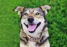 Leuk bruin puppy die uit in de tuin op een achtergrond van B gluren stock afbeelding