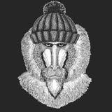 Leuk dier die de gebreide Aap van de de winterhoed, baviaan, hond-aap, aaphand getrokken beeld voor tatoegering, embleem, kenteke vector illustratie