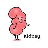 Leuk en grappig menselijk nierkarakter Royalty-vrije Stock Afbeelding