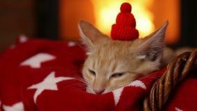 Leuk gemberkatje die op santa wachten die - bij de open haard liggen stock videobeelden