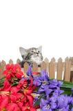 Leuk gestreepte katkatje Stock Foto's