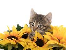 Leuk gestreepte katkatje met zonnebloemen Royalty-vrije Stock Afbeelding
