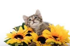 Leuk gestreepte katkatje met zonnebloemen Stock Fotografie