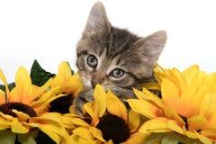 Leuk gestreepte katkatje met zonnebloemen Royalty-vrije Stock Afbeeldingen
