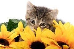 Leuk gestreepte katkatje met zonnebloemen Stock Foto's